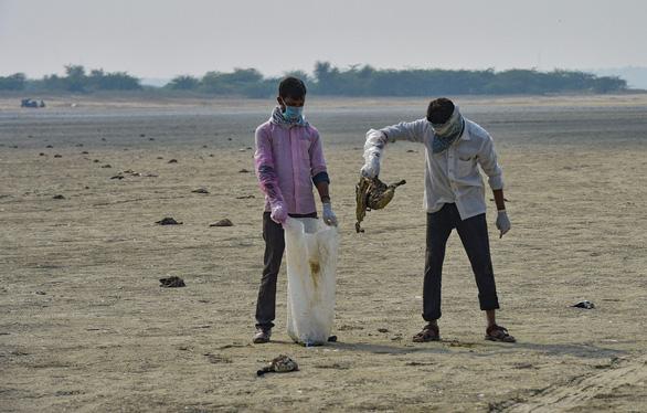 1.500 con chim chết rải 5-7km trên đường di trú - Ảnh 3.