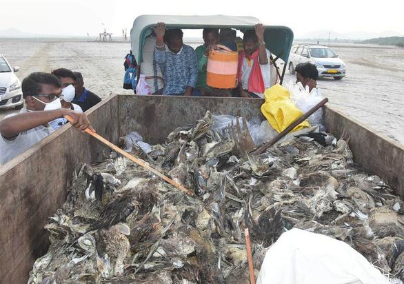 1.500 con chim chết rải 5-7km trên đường di trú - Ảnh 5.