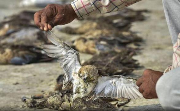 1.500 con chim chết rải 5-7km trên đường di trú - Ảnh 8.