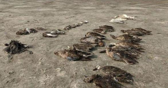 1.500 con chim chết rải 5-7km trên đường di trú - Ảnh 7.