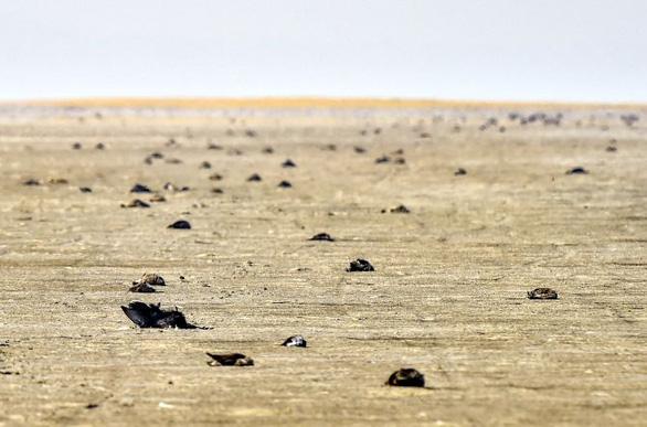 1.500 con chim chết rải 5-7km trên đường di trú - Ảnh 2.