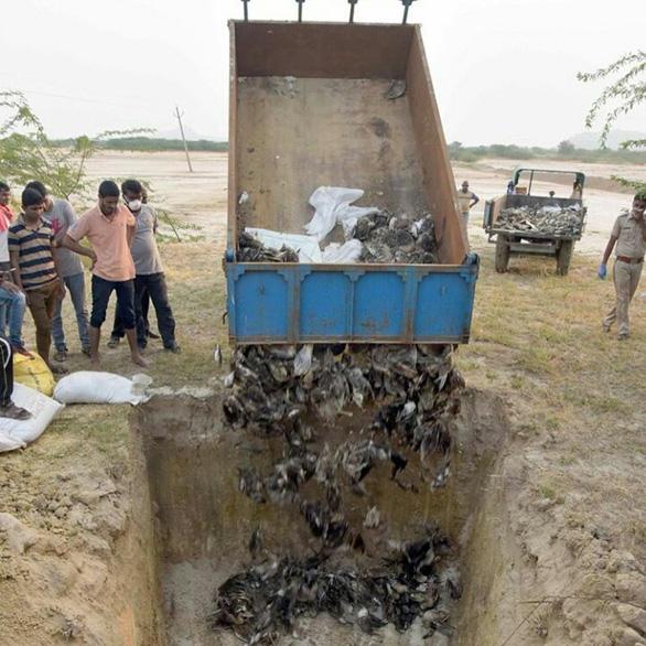 1.500 con chim chết rải 5-7km trên đường di trú - Ảnh 6.