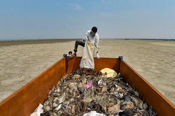 1.500 con chim chết rải 5-7km trên đường di trú - Ảnh 4.