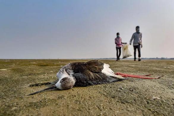 1.500 con chim chết rải 5-7km trên đường di trú - Ảnh 1.