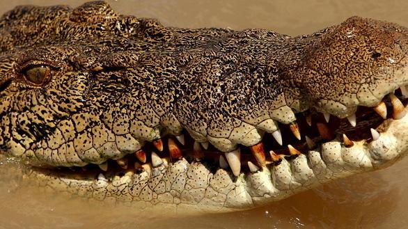 Bị cá sấu 2,8m lao vô ngoạm, chọc mù mắt thoát chết - Ảnh 1.