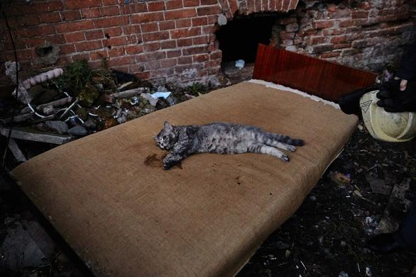 Lính PCCC giúp mèo thở oxy trong đám cháy thành 'người hùng' - Ảnh 4.