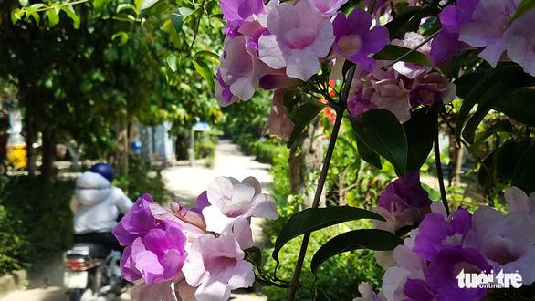 Làng miền Trung có cây trái quanh năm như miệt vườn Nam Bộ - Ảnh 3.