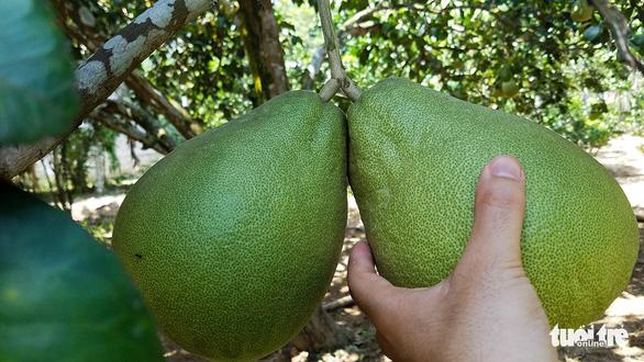 Làng miền Trung có cây trái quanh năm như miệt vườn Nam Bộ - Ảnh 5.