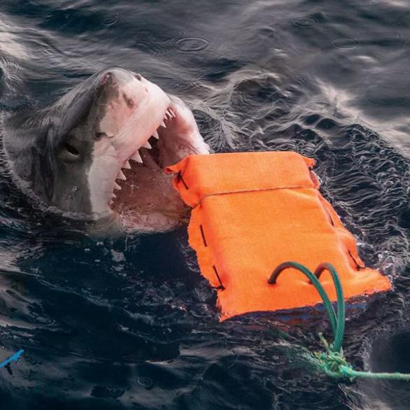 Đồ lặn chống cá mập cắn - Ảnh 1.