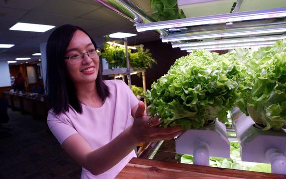 Kệ trồng rau thông minh không cần ánh nắng, mất điện 3 ngày vẫn sống khỏe - Ảnh 1.