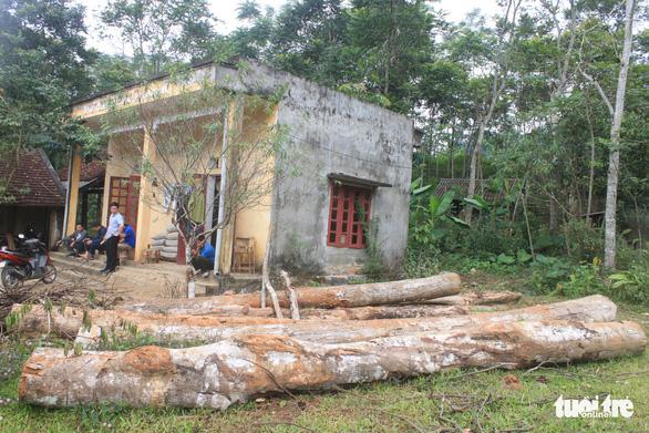 Lâm tặc lấy hàng trăm cây gỗ, kiểm lâm, chính quyền vẫn... giải trình - Ảnh 9.