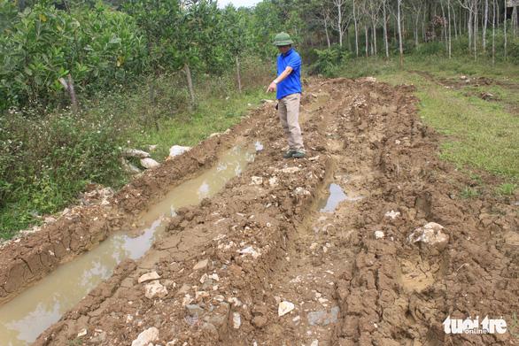 Lâm tặc lấy hàng trăm cây gỗ, kiểm lâm, chính quyền vẫn... giải trình - Ảnh 10.