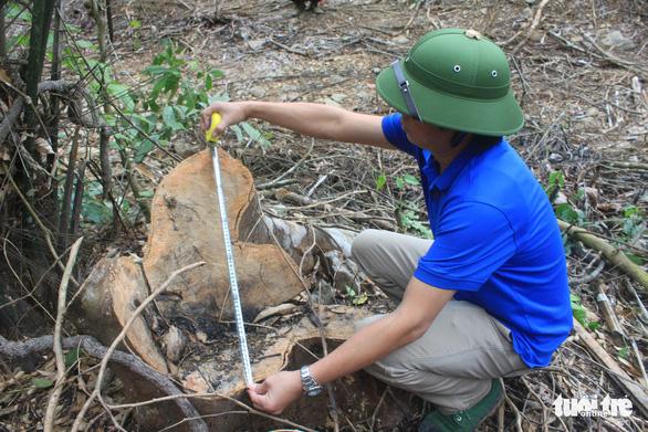 Lâm tặc lấy hàng trăm cây gỗ, kiểm lâm, chính quyền vẫn... giải trình - Ảnh 12.