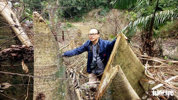 Lâm tặc lấy hàng trăm cây gỗ, kiểm lâm, chính quyền vẫn... giải trình - Ảnh 1.