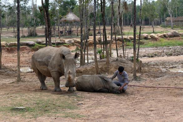 Động vật hoang dã phải được nuôi trong môi trường hạnh phúc - Ảnh 3.