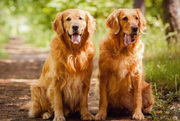 Tuyển người chăm chó toàn thời gian, trả lương hơn 920 triệu đồng/năm - Ảnh 1.