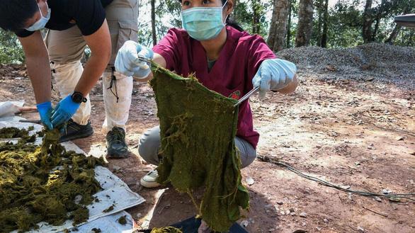Hươu hoang dã chết uất nghẹn sau khi ăn 7kg rác nhựa - Ảnh 2.