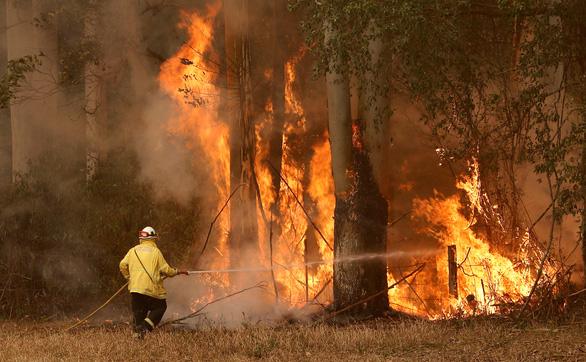 Bắt gã trai trẻ đốt rừng rồi tham gia tình nguyện chữa cháy - Ảnh 1.