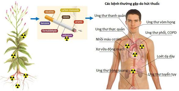 Chất phóng xạ trong thuốc lá gây nguy hiểm - Ảnh 2.