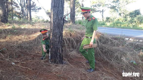 Tạm giam 5 người đầu độc hơn 1.100 cây thông ven quốc lộ 14 để chiếm đất - Ảnh 1.