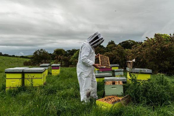 Tranh chấp quyết liệt vì loại mật ong thần dược - Ảnh 1.