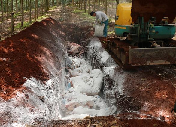 Tiêu hủy hơn 1,6 tấn thịt nhiễm dịch tả heo châu Phi ở Bình Phước - Ảnh 3.