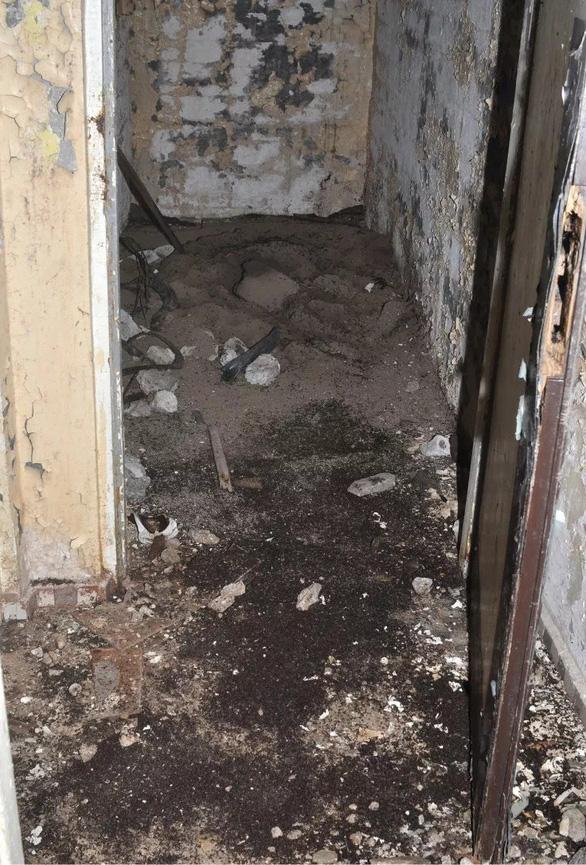 Phát hiện bí mật của 'binh đoàn' triệu con kiến trong hầm chứa hạt nhân - Ảnh 1.