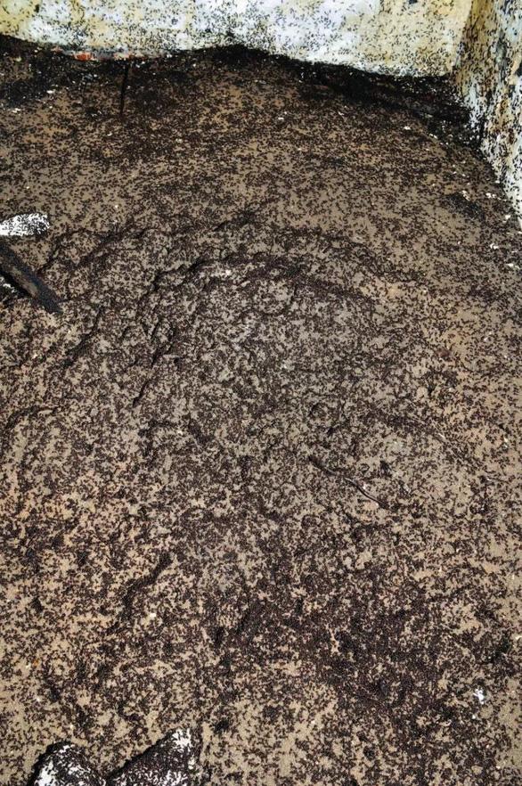 Phát hiện bí mật của 'binh đoàn' triệu con kiến trong hầm chứa hạt nhân - Ảnh 2.
