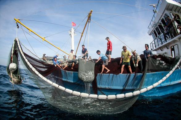 Tuần sau, EC lại đến Việt Nam kiểm tra việc khắc phục thẻ vàng thủy sản - Ảnh 1.