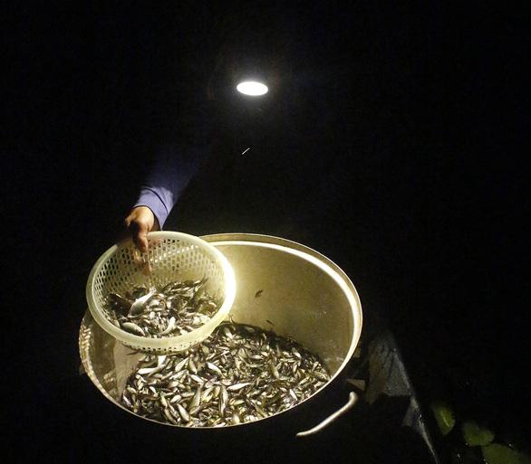 Thương nhớ những mùa cá linh - Kỳ 2: Mùa hội cá linh - Ảnh 4.