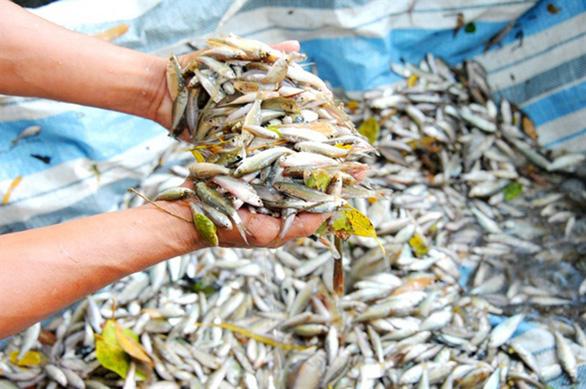 Thương nhớ những mùa cá linh - Kỳ 2: Mùa hội cá linh - Ảnh 1.