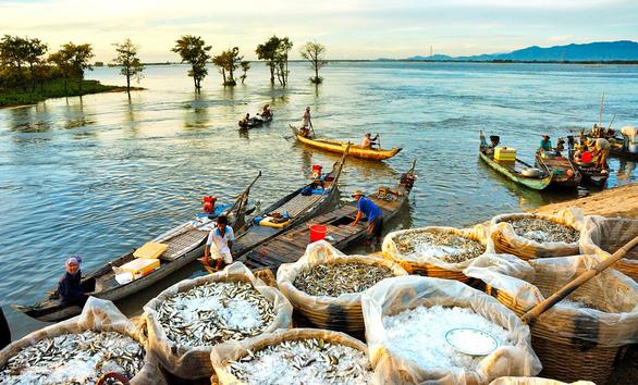 Thương nhớ những mùa cá linh - Kỳ 3: Mùa không đặng cá - Ảnh 3.