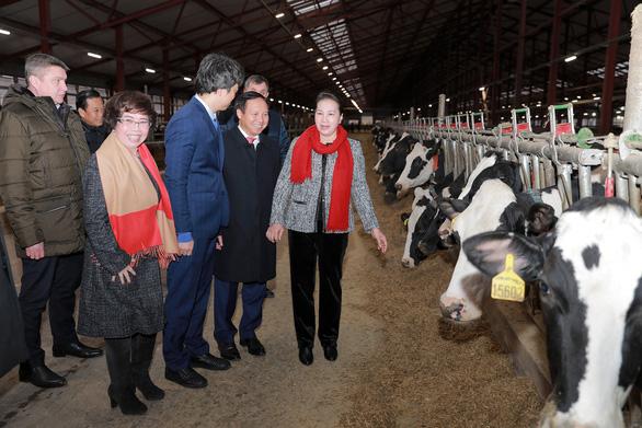 Chủ tịch Quốc hội thăm dự án sữa của doanh nghiệp Việt ở Nga - Ảnh 1.
