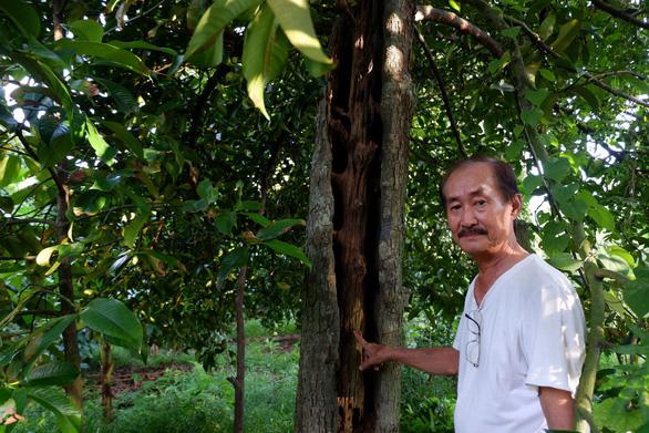 Kể chuyện cây trái miền Tây - Kỳ 3: Nữ hoàng trăm tuổi giữa cù lao Tân Quy - Ảnh 2.