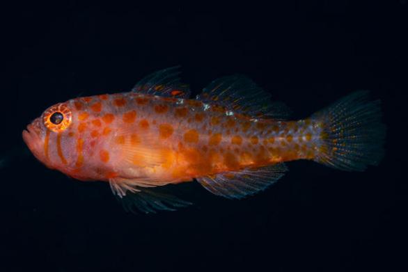 Tìm thêm 70 sinh vật mới nhưng hơn 90% các loài vẫn chưa được biết đến - Ảnh 1.