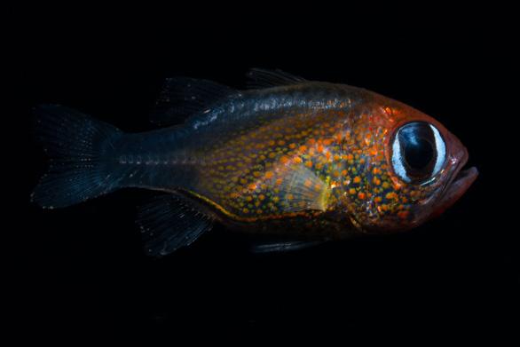 Tìm thêm 70 sinh vật mới nhưng hơn 90% các loài vẫn chưa được biết đến - Ảnh 9.