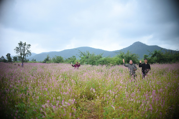 Cánh đồng hoa dền cát trời cho đẹp lạ lùng ở Phú Yên - Ảnh 4.
