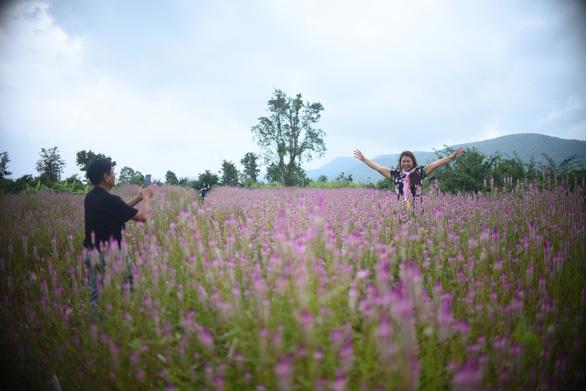 Cánh đồng hoa dền cát trời cho đẹp lạ lùng ở Phú Yên - Ảnh 8.