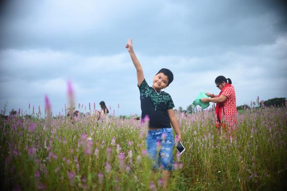 Cánh đồng hoa dền cát trời cho đẹp lạ lùng ở Phú Yên - Ảnh 6.
