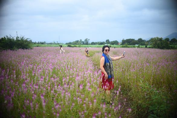 Cánh đồng hoa dền cát trời cho đẹp lạ lùng ở Phú Yên - Ảnh 1.