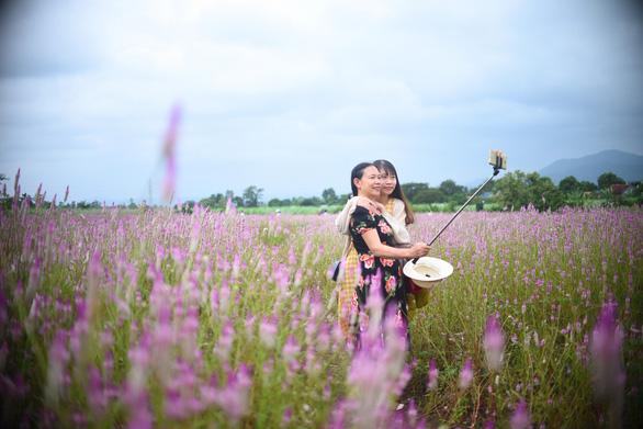 Cánh đồng hoa dền cát trời cho đẹp lạ lùng ở Phú Yên - Ảnh 7.