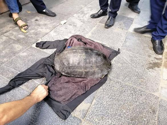 Câu trộm rùa hơn 10kg nổi lên ở hồ Hoàn Kiếm, bị dân trình báo - Ảnh 1.