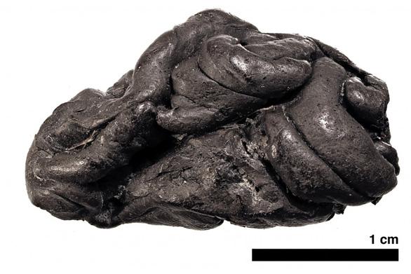 Cô gái 5.700 năm trước được phục dựng bản đồ gen nhờ bã kẹo cao su - Ảnh 2.