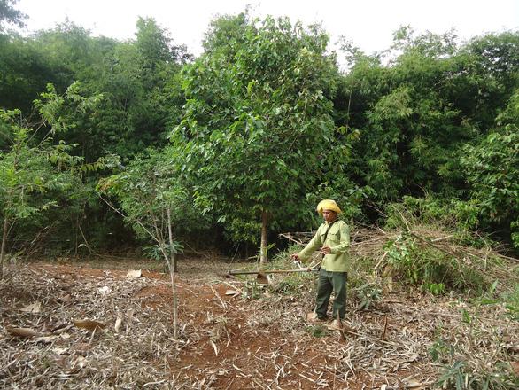 Chi sai hàng tỉ đồng trong quản lý, bảo vệ rừng ở Bình Phước - Ảnh 2.