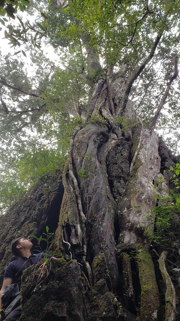 Đi tìm rừng thiêng - Kỳ 1: Chinh phục đỉnh bách - Ảnh 2.