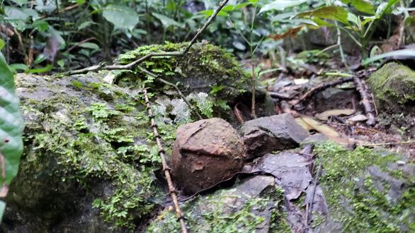 Đi tìm rừng thiêng - Kỳ 1: Chinh phục đỉnh bách - Ảnh 3.