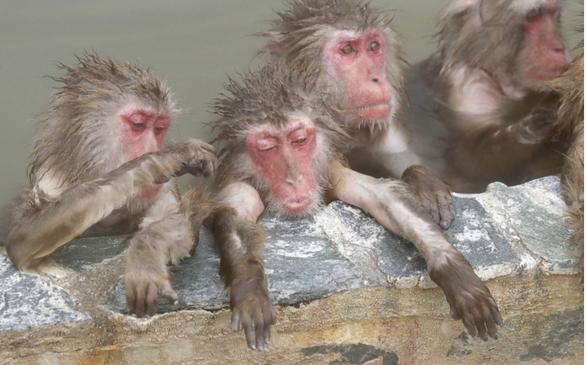 Nhật xây khu suối nước nóng cho khỉ nghỉ dưỡng - Ảnh 1.