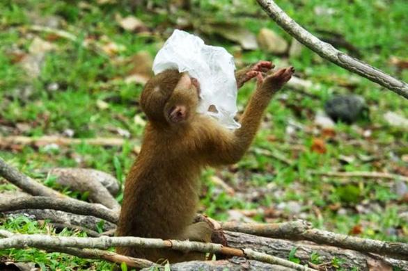 Đi thăm công viên rừng ở Thái sẽ phải mang theo túi đựng rác - Ảnh 1.