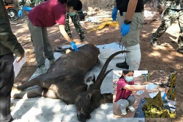 Đi thăm công viên rừng ở Thái sẽ phải mang theo túi đựng rác - Ảnh 3.