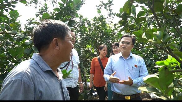 Phát triển đường hoa mai vàng Bình Chánh thành đặc sản du xuân - Ảnh 3.